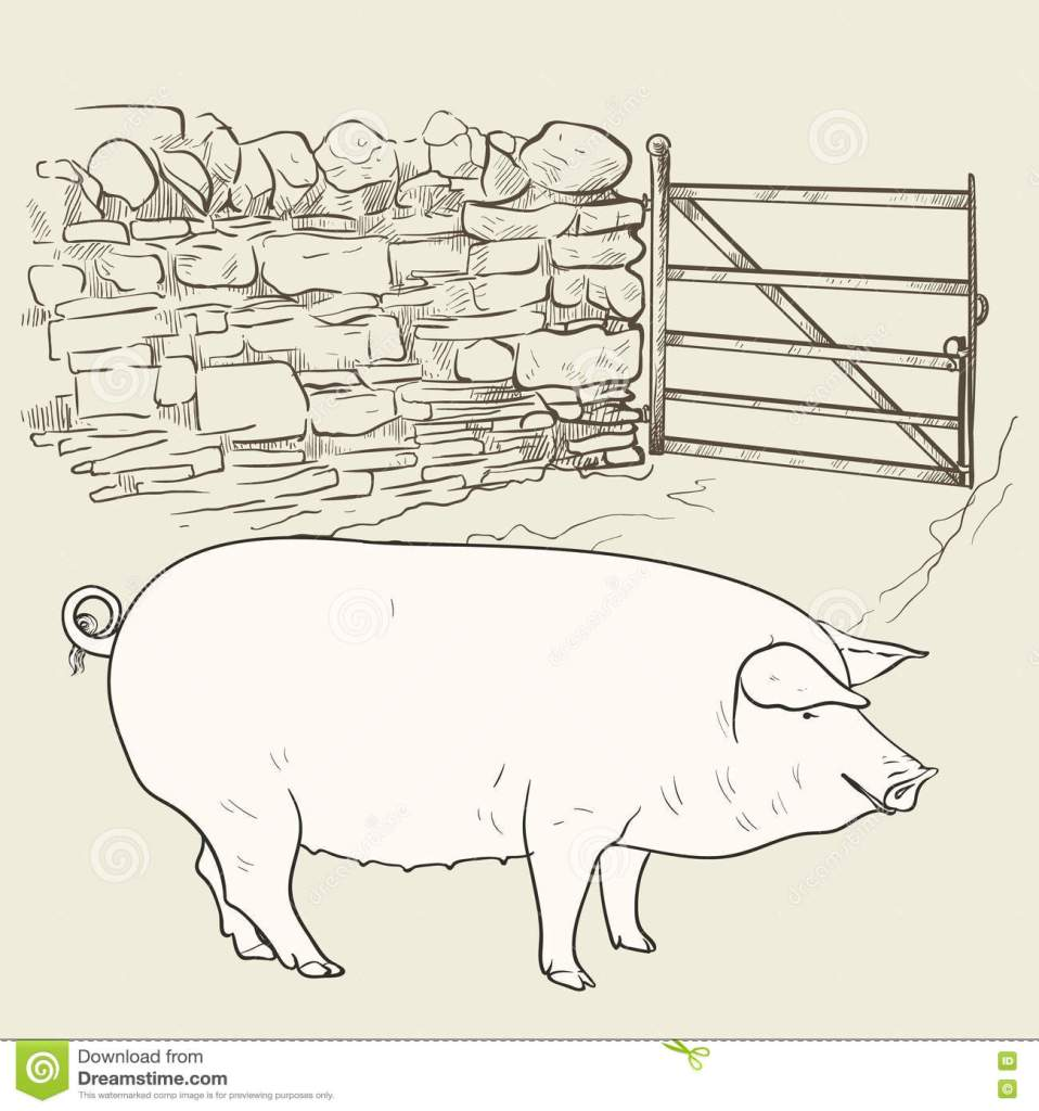 pencil sketch of a rather plumb sow (pig) placed in front of an open gate that hangs off a stone wall
